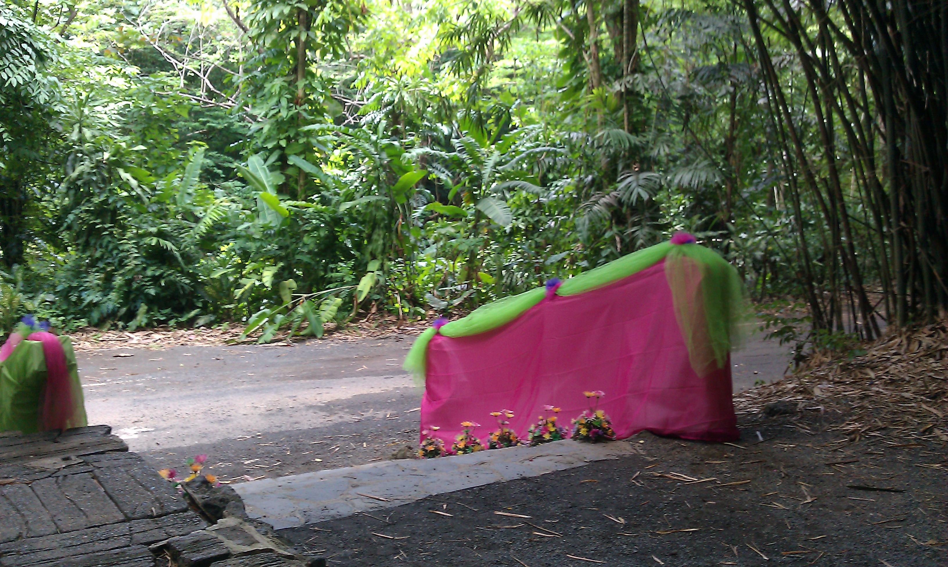 Jardin botanico4 en mi patio for Bodas en el jardin botanico